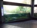 Berlyno zoologijos sodo akvariumas