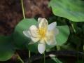lotosai 2014-1 005