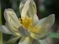 lotosai 2014-1 006