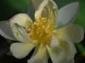 lotosai 2014-1 007