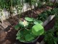lotosai 2014-1 008