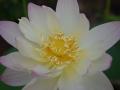 lotosai 2014-1 019