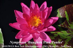 Antra vieta - Nymphaea 'Bangkok Pink Panther', autorius - Jakkaphong Sangngam (Tailandas)